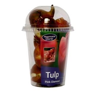 Tulp Roze Diamand Bloembollen
